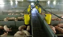 vleesvarkensbedrijf 20140212_155922.jpg